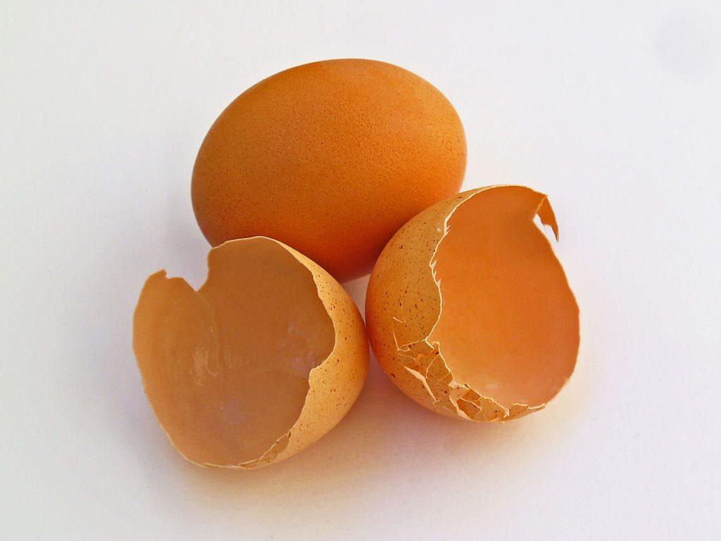 Eierschalenmehl und Algenkalk – nicht geeignet zur Fütterung, besonders nicht für Hunde im Wachstum!!!