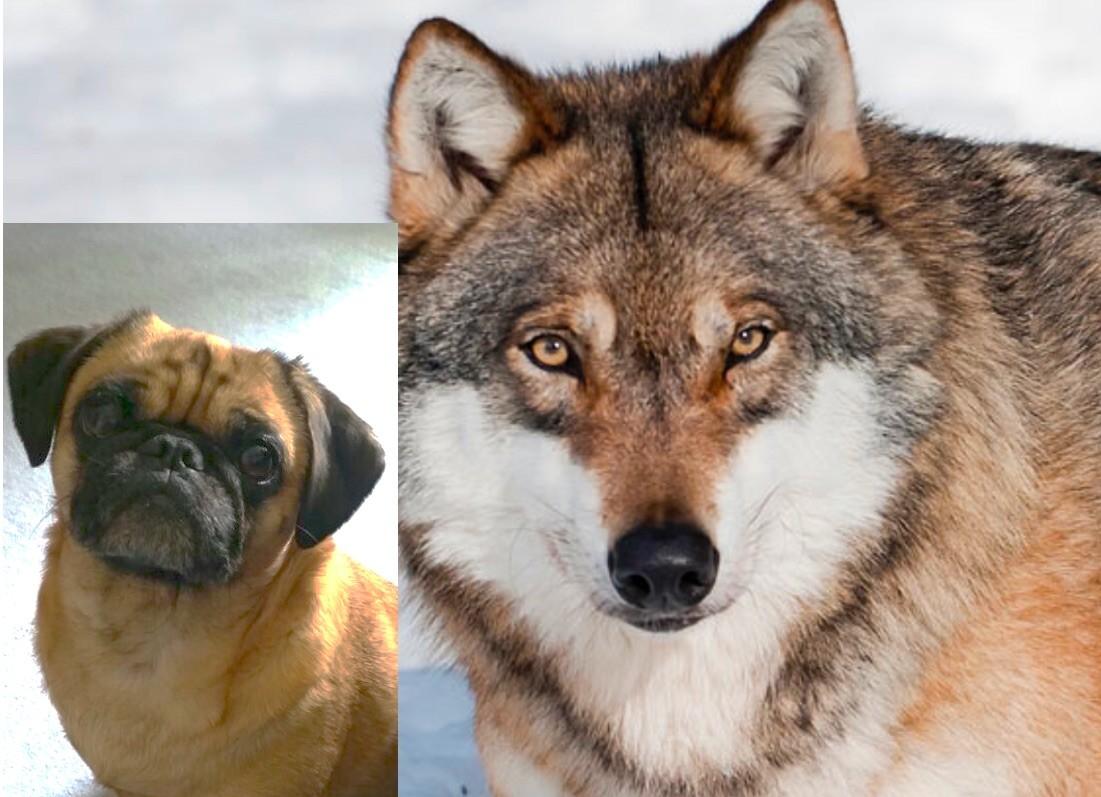 Nina und Wolf 2
