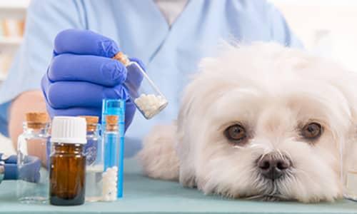 Hund bei der Homöopathie für Tier in der mobilen Tierheilpraxis MY BEST FRIEND
