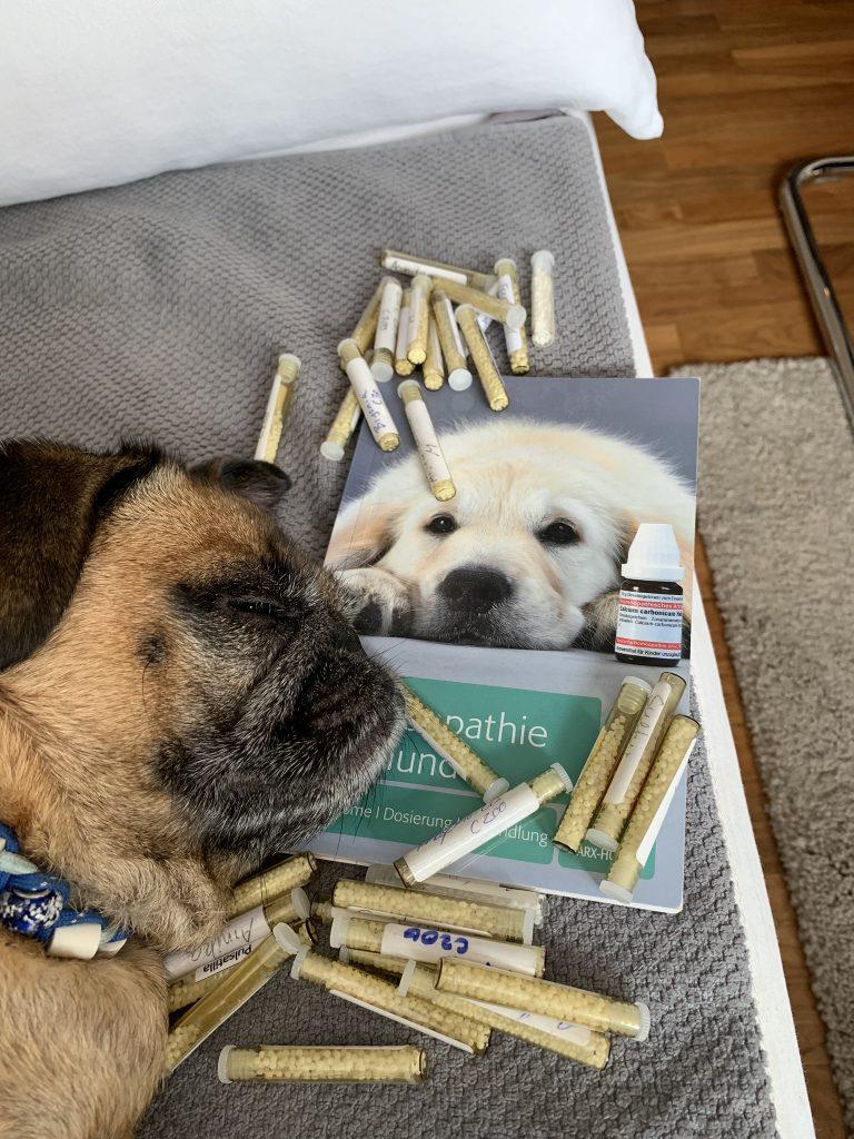Homöopathie für Ihr Haustier