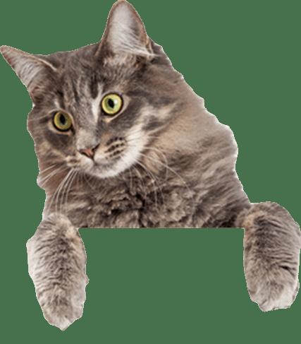 Neugierige Katze bei MY BEST FRIEND
