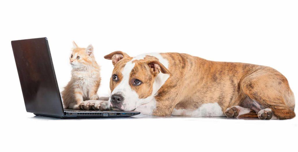 Hund und Katze am Computer