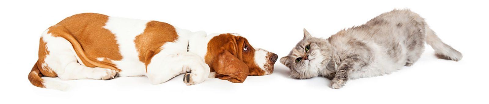 Hund und Katze liegen gegenüber bei MY BEST FRIEND