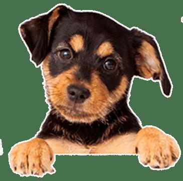 Kleiner süßer Hund bei MY BEST FRIEND