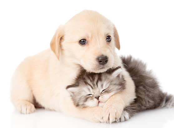 Kleiner Welpe und Katze schmusen süß miteinander