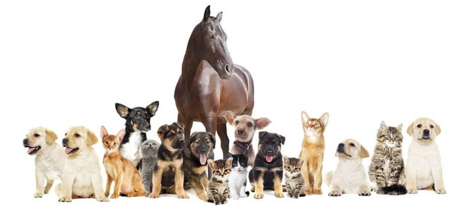 Ein Pferd, Hunde & Katzen verschiedener Rassen stehen gemeinsam